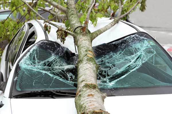 Tree fell in top of car, destroying it.